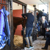 Grooms preparing their horses for the first horse inspection