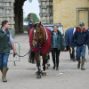 Horses coming back into the stable yard after being grazed in front of Badminton House