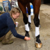 Finishing touches before heading across to the dressage arena