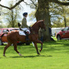MSH Bonanza lining up the first fence in the Dubarry Young Event Horse class