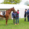 Tina Cook and 'Billy the Red', post-dressage