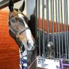'Xavier Faer' admiring his stable decor