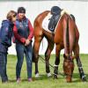 British team vet, Liz Brown having a look at 'Calvino II'