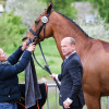 Final touches - La Biosthetique Sam FBW thinks he's ready to go, but his groom thinks otherwise