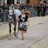 Tiana Coudray riding Ringwood Magister USA at the first trot up
