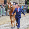 The vet check: Oliver Townend riding Armada GBR