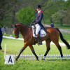 William Fox-Pitt warms up Parklane Hawk