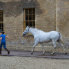 Early morning in the stables