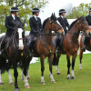 Police horses on parade