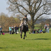 Showing a good gallop in the suitability and potential stage of the judging