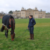 A pick of grass for Anna Warnecke's (GER) Twinkle Bee in front of Badminton house before the action starts