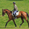 Michael Jung with his World, Olympic and European Champion La Biosthetique – Sam FBW