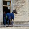 Ludwig Svennerstal's horse admires the  Badminton stableyard