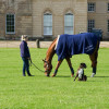 A pick of grass in front of Badminton House for Pippa Funnell's  Redesigned