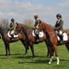 The first 3 in the 4yr old section of the Burghley Event Horse Class