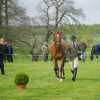 Conformation judging in the Dubarry Young Event Horse class