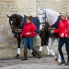 Paul Tapner's horses with Georgie and
