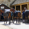 Horses from Mark Todd's yard arrive