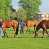 The French horses