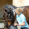A well deserved bath for Laura Collett's Rayef after his test