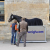 Checking the weight of  Ingrid Klimke's (GER) ride FRH Butts Abraxxas's