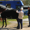 Vet Mark Lucey checks the temperatures of Mark Todd's horses