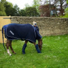 Laura Collect & Grand Manoeuvre getting a quick pick of grass.
