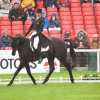 Andrew Nicholson riding Quimbo NZL in Dressage