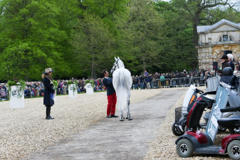 'Cadeau du Roi' inspecting the crowds down alongside Badminton House