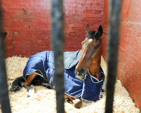 'Kilpatrick Knight' enjoying some down-time