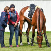 British team vet, Liz Brown having a look at 'Calvino II'