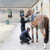'Euro Prince' being prepped for a mid-morning hack