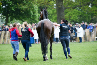 'Zagreb' looking very pleased with himself following an amazing clear