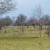 The parkland