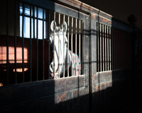 Badminton stables winter occupants