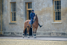 Sebastien Cavaillon with his ride Sarah d'Argouges