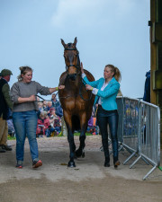 Pats for Springpower after an eventful first horse inspection