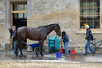 A bath and a kiss before the first horse inspection