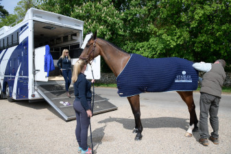 Zagreb has his temperature checked by vet Liam Kearns