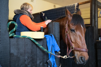 Preparation for the final horse inspection taking place down in the stables