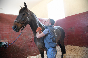 First horse in the stables is Rubis de Prere, the ride of Italian Pietro Sandei