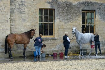 Last bath before the first horse inspection