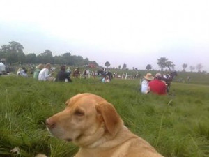 Louisa Jenkins Not sure which year. Molly went to so many, but she always enjoyed chilling by the xc warm up