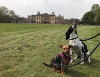 Clare Morgan Roxy and Indie can't wait for a return visit this was taken in 2019