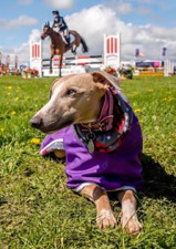 Sam Morris This is our Whippet Summer. We were watching the Mitsubishi Motors Cup competition in 2018