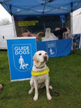 Alicia Griffiths This is my gorgeous guide dog mini. She loves exploring the cross country course when not working. Pic of her at the guide dog stand 2019