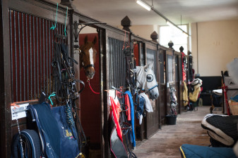 The stables this morning
