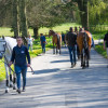 Horses preparing for the trot up