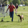 Paul Tapner runs the cross country with his dogs