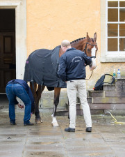 Vestervangs Arami is prepared for the trot up